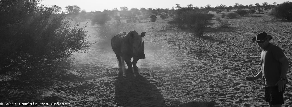 The Rhino Whisperer.